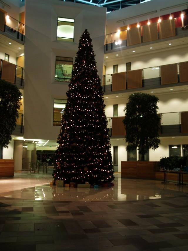 sage tree1